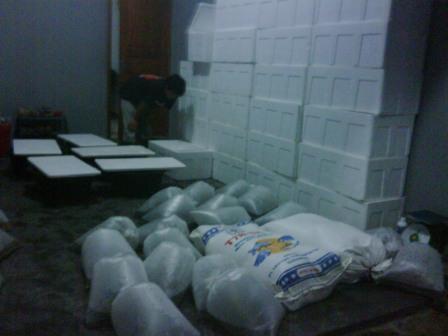 pengiriman benih ikan mas